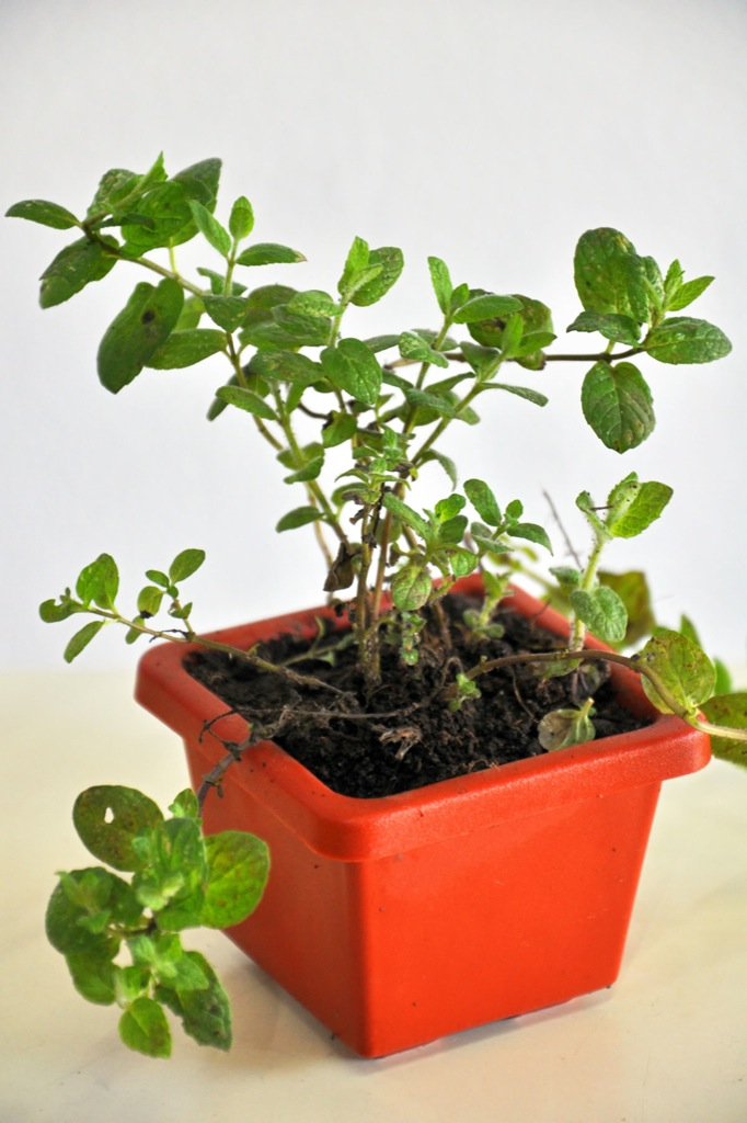 Arom ticas asociaci n civil andar for Asociacion de plantas aromaticas