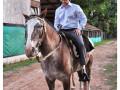 Gaucho, el nuevo caballo de la Granja Andar.